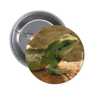 Iguana Photos Button