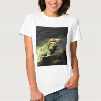 Iguana Playeras