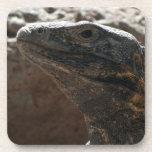 Iguana Portrait Coasters