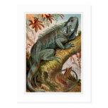 Iguana Post Cards