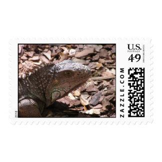 Iguana Postage Stamp