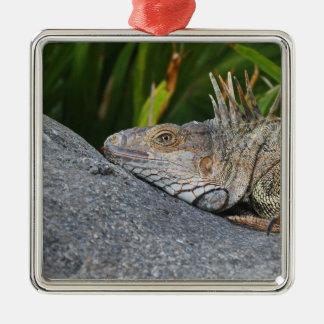 Iguana Premium Square Ornament