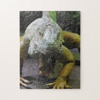 Iguana Puzzle