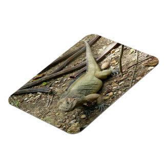 Iguana Rectangular Magnets