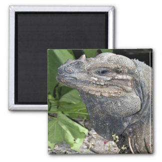 Iguana Refrigerator Magnet
