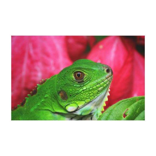 Iguana - rosa y verde lona envuelta para galerias
