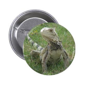 Iguana Round Pin