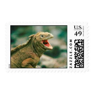 Iguana Says Rawr Postage