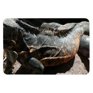 Iguana Skin Detail Magnet
