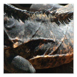 Iguana Skin Detail Photographic Print