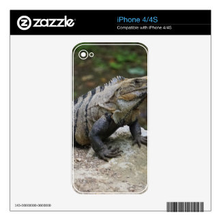 Iguana Skin For The iPhone 4