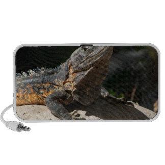 Iguana Sun-Que adora Altavoces
