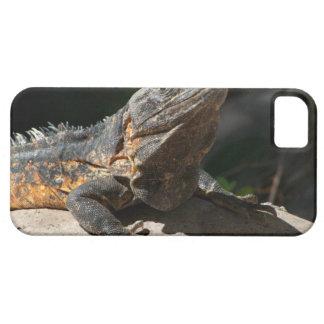 Iguana Sun-Que adora iPhone 5 Fundas