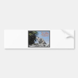 Iguana sun worshipper car bumper sticker