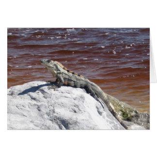 Iguana Sunning Card