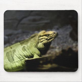 Iguana Tapetes De Ratón