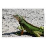Iguana Tarjeta De Felicitación