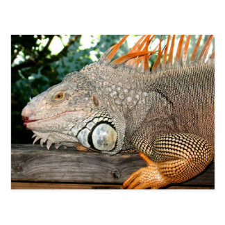 Iguana Postal