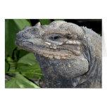 Iguana Tarjetas