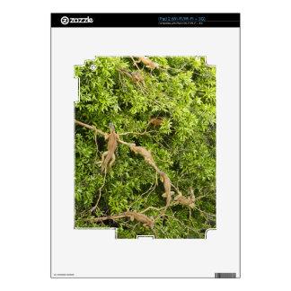Iguana Tree Skin For iPad 2