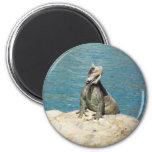 Iguana Tropical Animal Photography 2 Inch Round Magnet