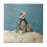 Iguana Tropical Animal Photography Small Square Tile