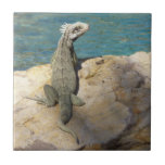 Iguana Tropical Animal Photography Tile