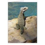 Iguana Tropical Wildlife Card