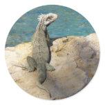 Iguana Tropical Wildlife Classic Round Sticker