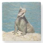 Iguana Tropical Wildlife Stone Coaster