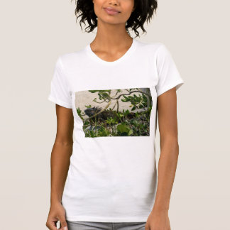 Iguana Tee Shirts