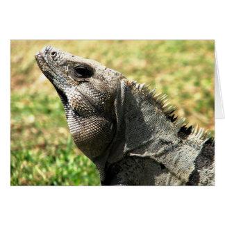 Iguana, Tulum, Mexico Card