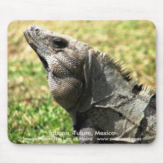 Iguana, Tulum, Mexico Mouse Pad