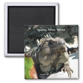 Iguana, Tulum, Mexico Refrigerator Magnets