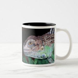 Iguana Two-Tone Coffee Mug