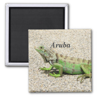 Iguana verde de Aruba Imán Cuadrado