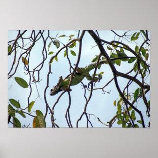 Iguana verde en ramitas del árbol póster
