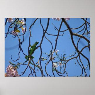 Iguana verde entre los flores rosados póster