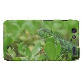 Iguana verde motorola droid RAZR fundas
