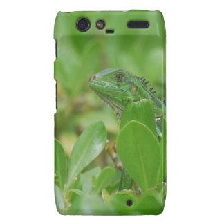 Iguana verde motorola droid RAZR carcasa