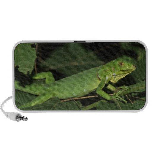 Iguana verde, (iguana de la iguana), iguanas comun mp3 altavoz
