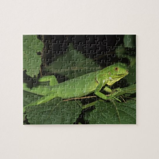 Iguana verde, (iguana de la iguana), iguanas comun puzzle