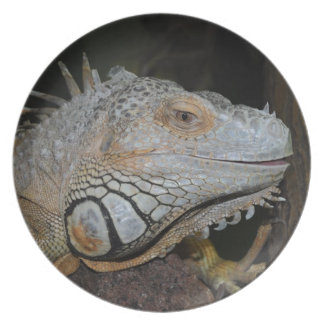 Iguana verde platos