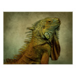 Iguana verde poster
