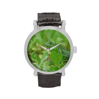 Iguana verde reloj