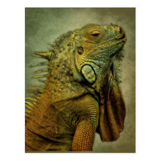 Iguana verde postal