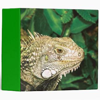 "Iguanas 2"""
