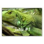 Iguanas and Lizards Card