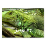 Iguanas and Lizards Table Number