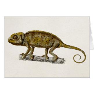 Iguanas del ejemplo del lagarto de la iguana de lo tarjeta